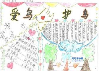 以爱鸟为主题的手抄报,该设置哪些有特色的栏目