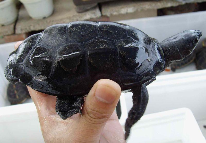 发廊养乌龟有什么风水讲究好么