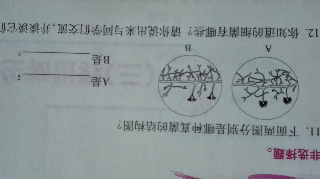 下面两图分别是哪种真菌的结构图?生物题