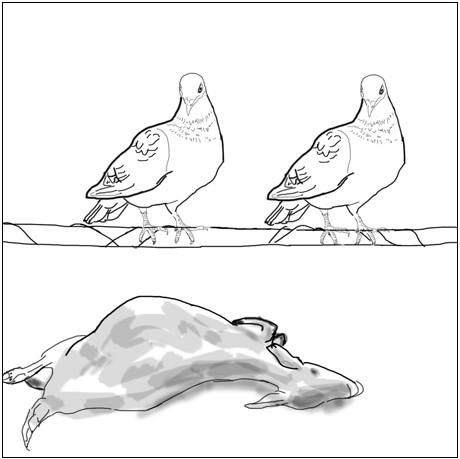 怀孕的人梦到小鸟死了 又来一只活的意思