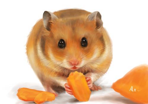 仓鼠能吃带油腻的东西么?图片
