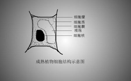 成熟植物细胞结构示意图