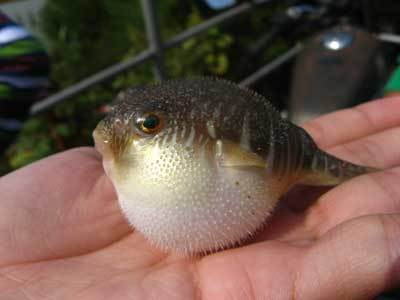 鱼的结构图及介绍