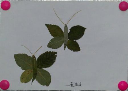树叶粘贴画的图片