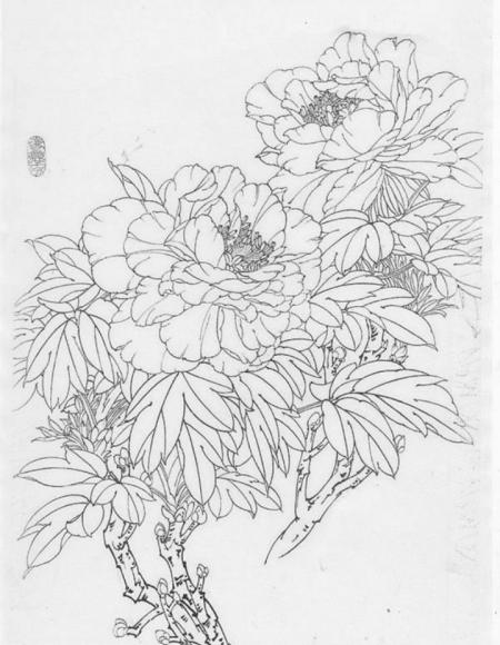 有牡丹花的素描图片吗?