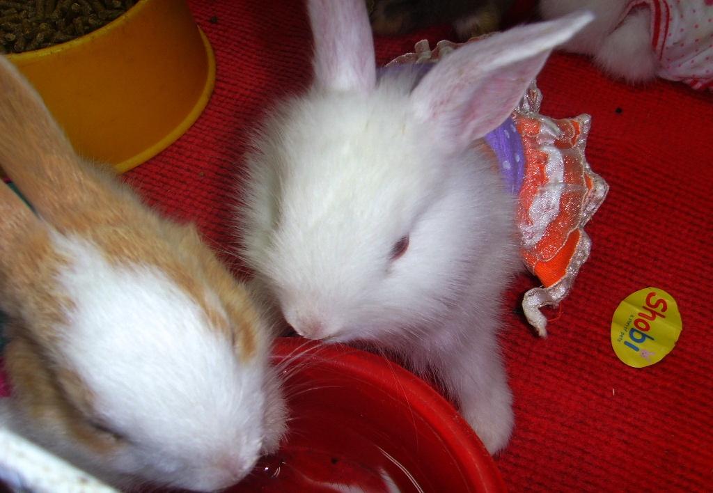 活物哦,哦,可爱的小兔兔图片