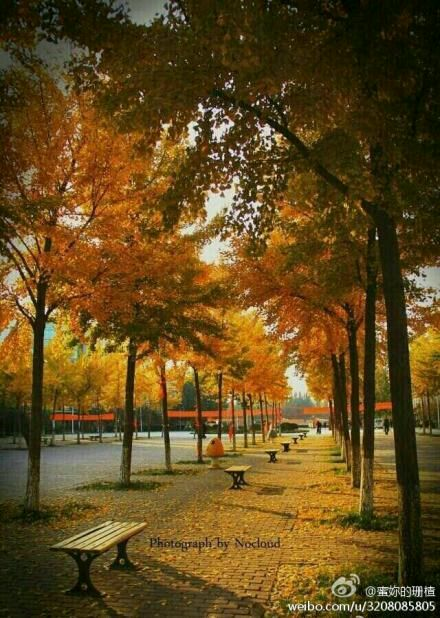 校园美景图片