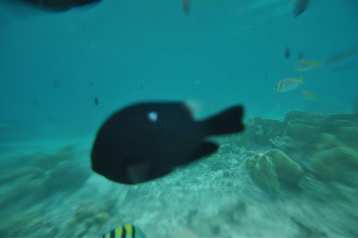 壁纸 动物 海底 海底世界 海洋馆 水族馆 鱼 鱼类 1204_800