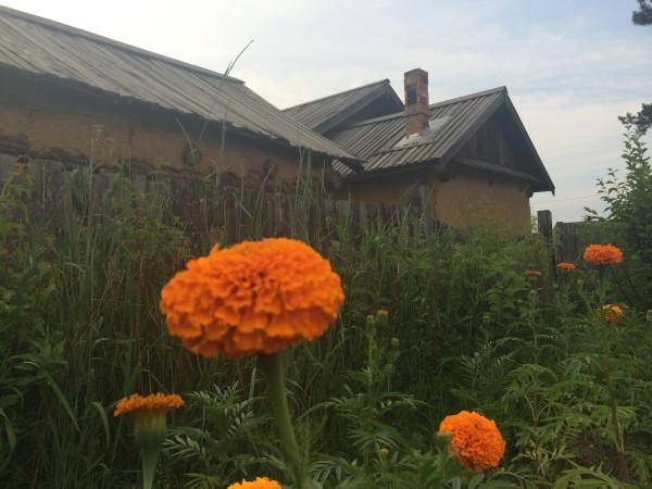 呼伦贝尔大草原旅游攻略图片167