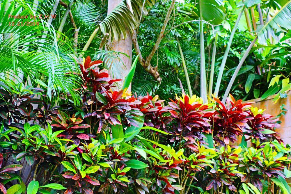 各种热带植物图片