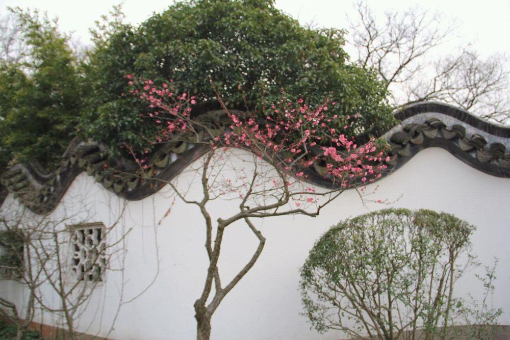 20160219南京梅花山