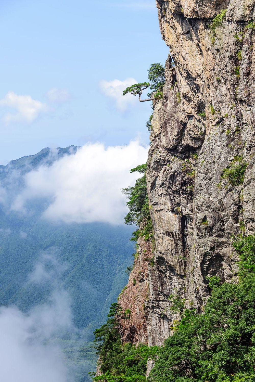 丽水龙泉山,华东的北欧森林童话