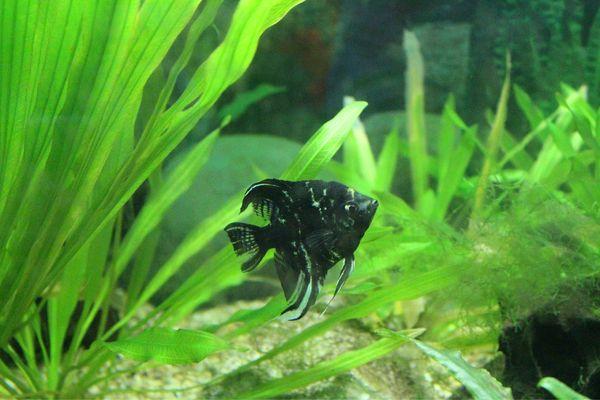 壁纸 动物 水草 水生植物 鱼 鱼类 600_400
