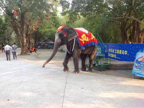 2012年12月深圳动物园旅行