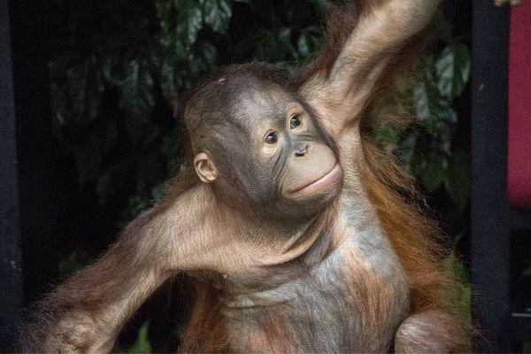 广州·长隆野生动物世界