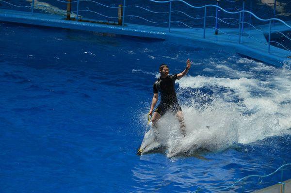 白鲸骑士图片
