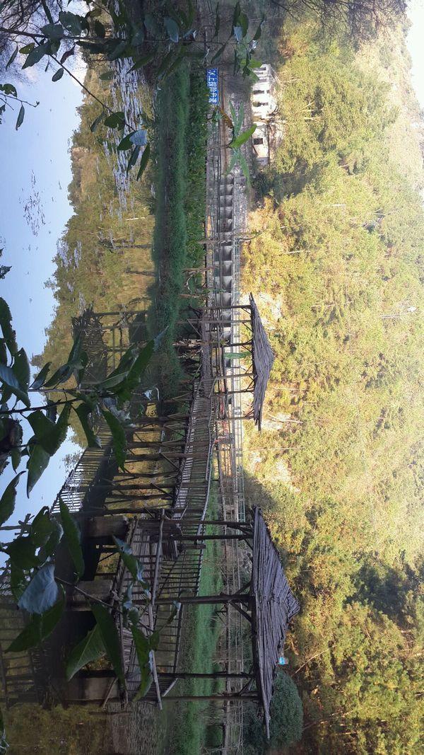 贵州省惠水县野梅岭森林公园图片