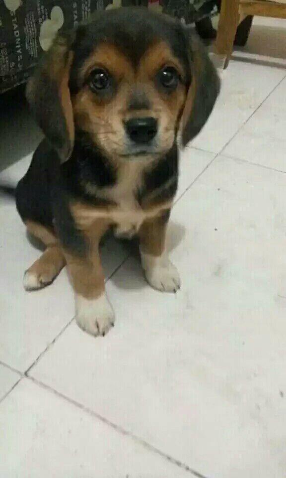 狗的种类傹.���/_我这个大耳朵狗什么品种