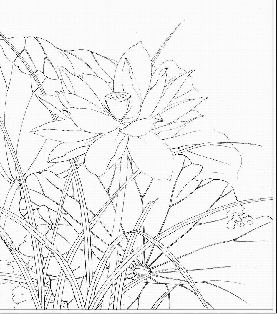 荷花画法铅笔步骤画