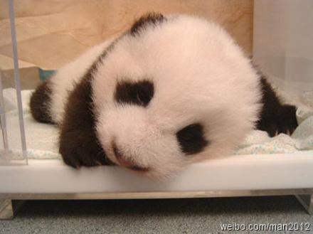 求12种可爱的小动物