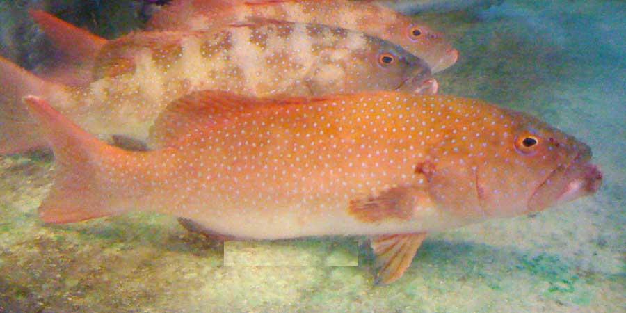 ??_這是什么魚