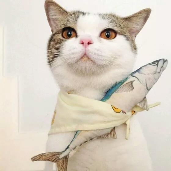求好看的猫猫头像,不要动漫,不要带人,就是单独的猫,要好看的,不要土