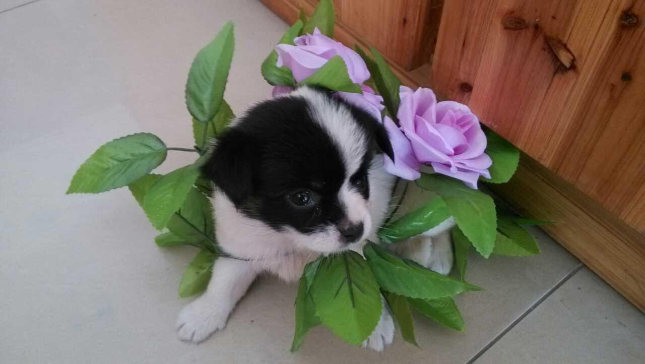 谢谢,为表示感谢,让我们的小西米送花给你吧,哈哈哈