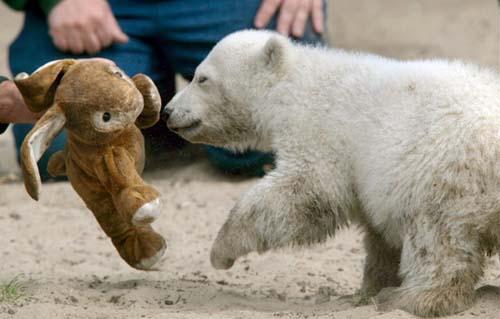 小北极熊knuthavingashittyday很可爱的歌词, 小北极>