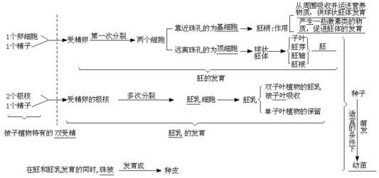 被子植物胚囊产生并发育至成熟的过程.(用箭头流程图表达)