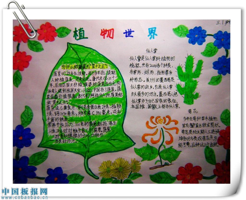 关于植物手抄报图片