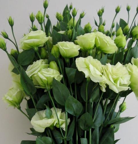 求这种花的名字,花语 急急急
