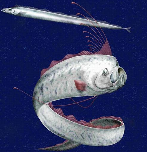 桨鱼吃人的视频_桨鱼图片