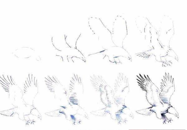 简单的小鸟怎么画