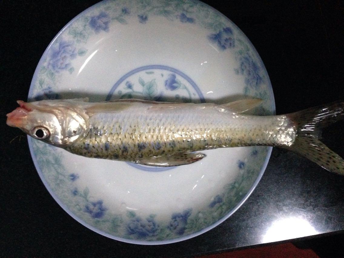 背上有像蛇一样的花纹,细细长长的,不知是什么鱼?