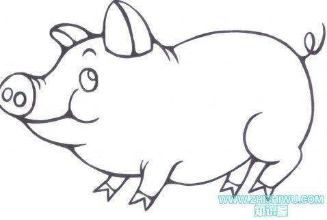 怎么画小猪