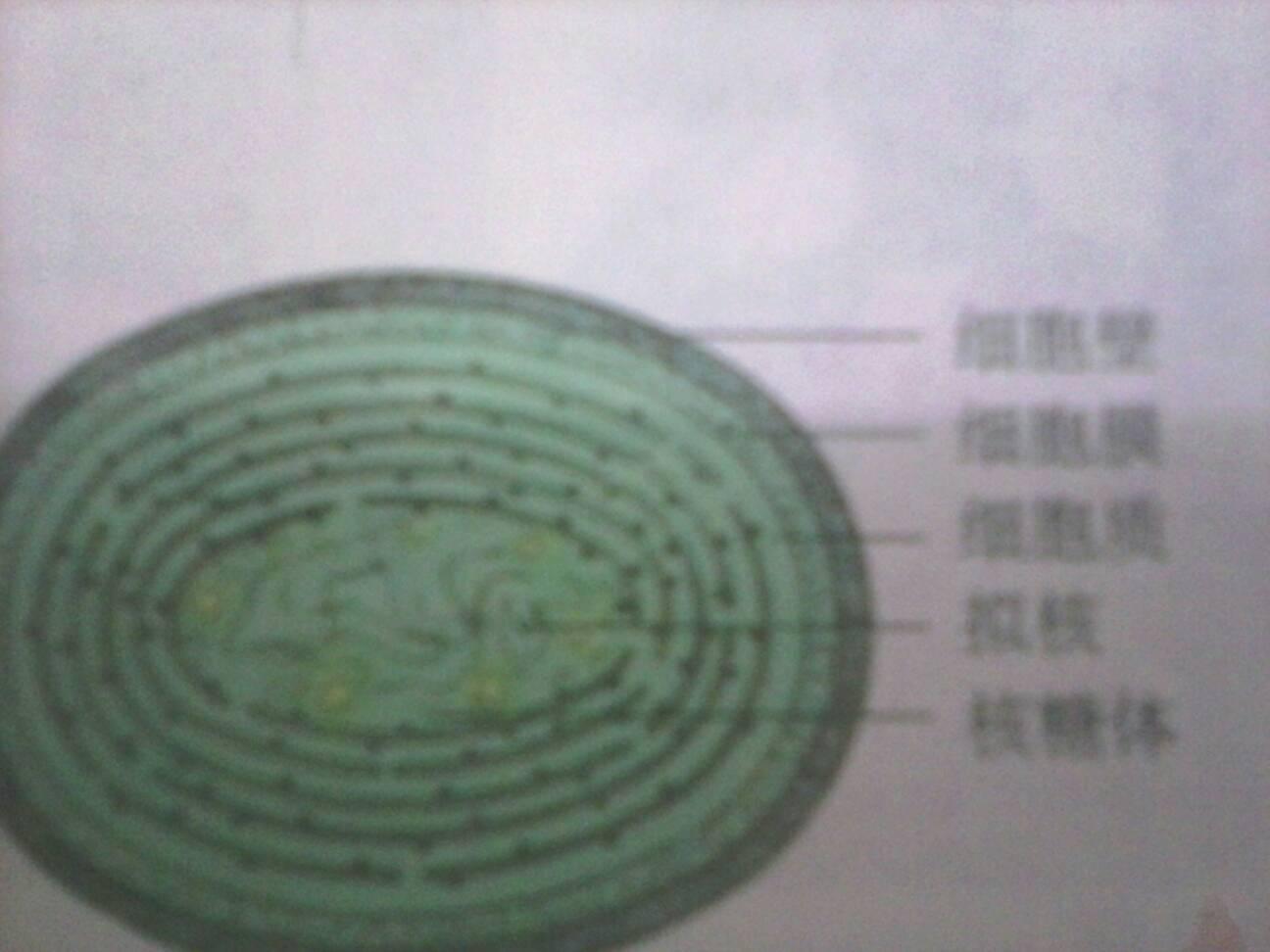 求原核细胞,动物细胞和植物细胞的图,要带结构名称带结构名称,在线等