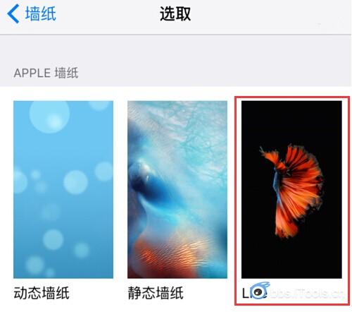 iphone6s怎么设置动态墙纸,不是live点压的那种墙纸,也不是手机自带的