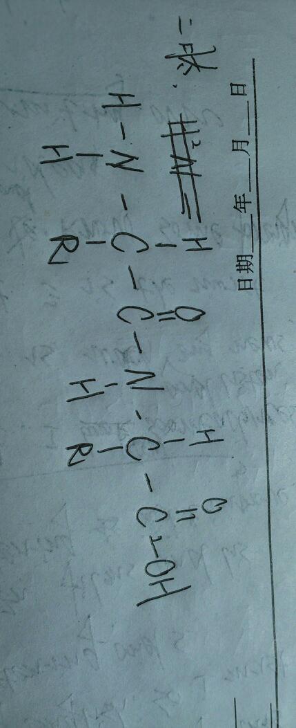 生物,二肽,三肽,四肽结构图怎么画