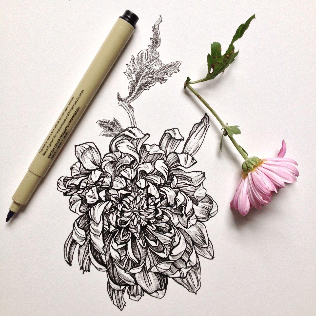 阳光下成长素描画花朵