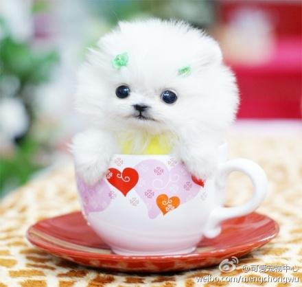 图片里那只可爱的小狗狗是什么狗,大家知道吗?市场价大概多少啊?