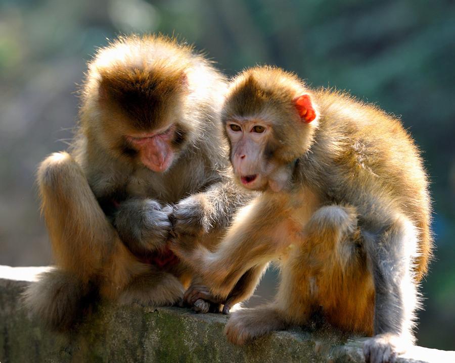 最可爱的猴子品种