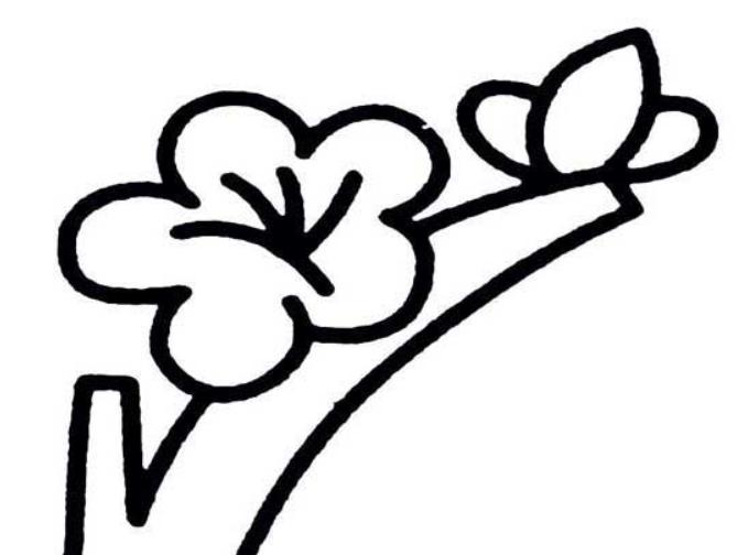 画桃花的简笔画的步骤