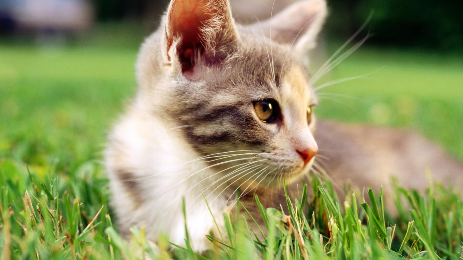有可爱的猫咪的图片吗?