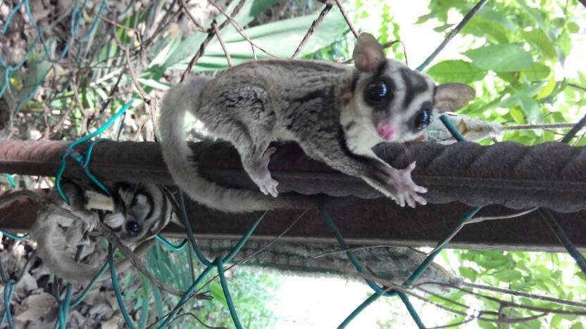 这个是什么动物? 有双水汪汪的大眼睛