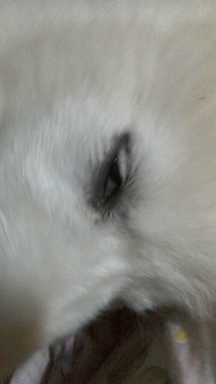 狗狗的白色,打完眼角回家,眼睛就是,有天极,看起来像斗鸡眼,是今疫苗真散打道与空手图片