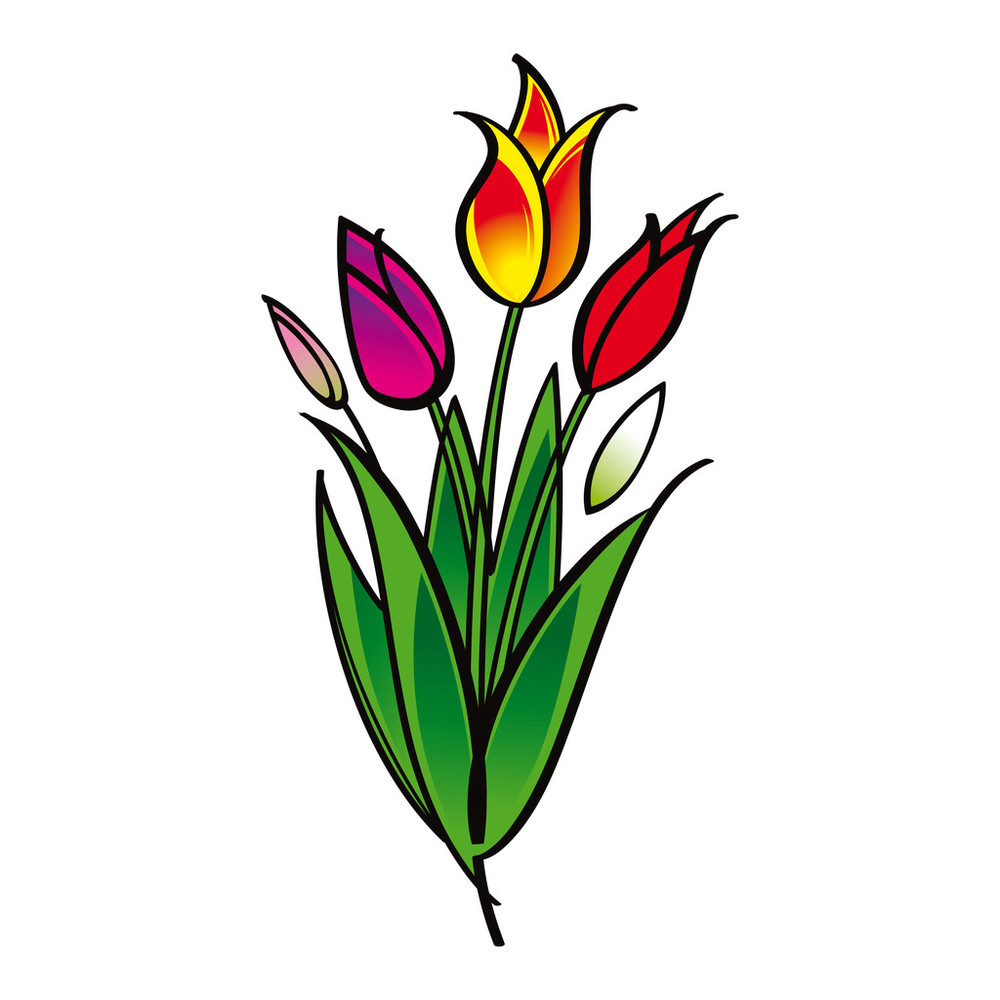 郁金香是什么颜色简笔画