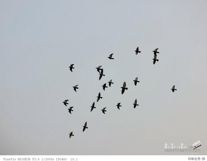 放鸽子,既指放飞白鸽,又指不遵守诺言,带有欺骗的含义.
