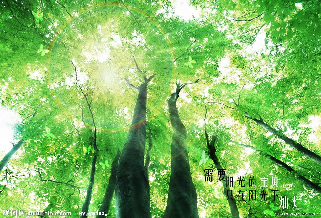 求高清图片 阳光从绿色树叶间透过 从指间透过 诸如此类的!