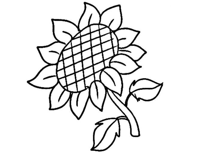 怎么画向日葵