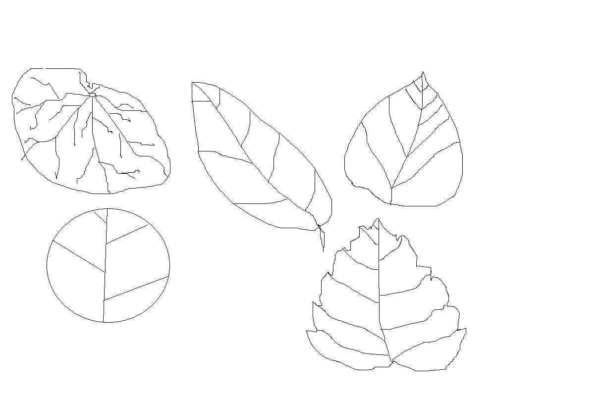 各种叶子怎么画